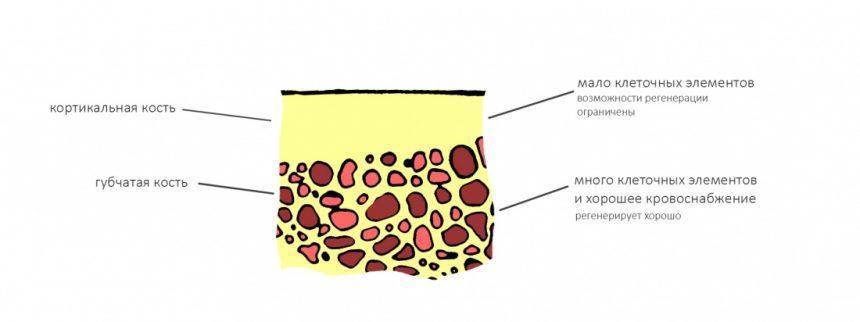 Структура костной ткани